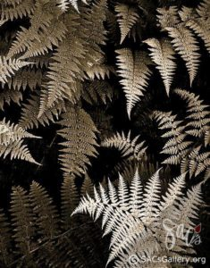 """Ferns"" by Kay Brummal"