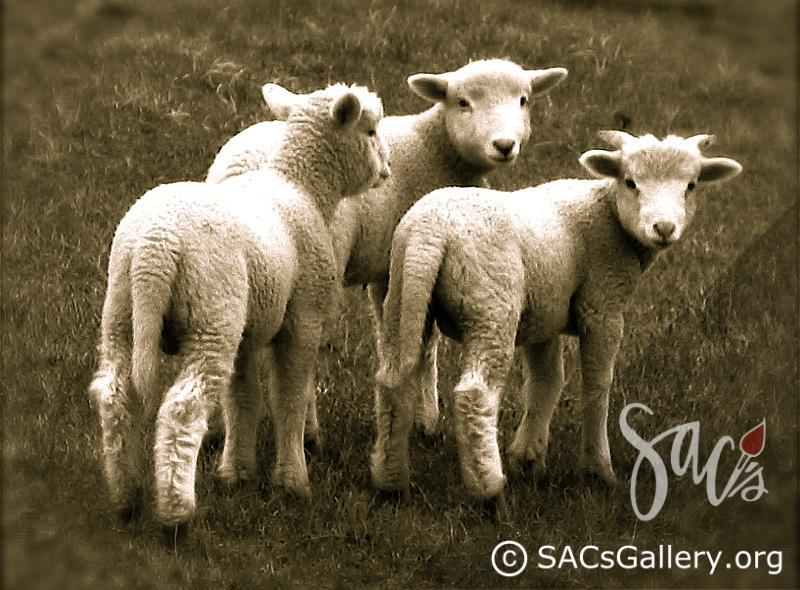 """Lamb Trio"" by Kay Brummal"